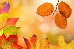 autumn-1649362__340